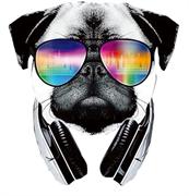 ТТ Собака в очках