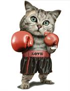 ТТ Кот боксер